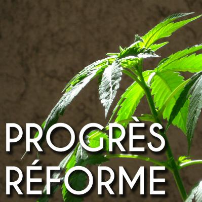 CP #5 Légalisation du cannabis : pour une approche sanitaire, sociale et solidaire.
