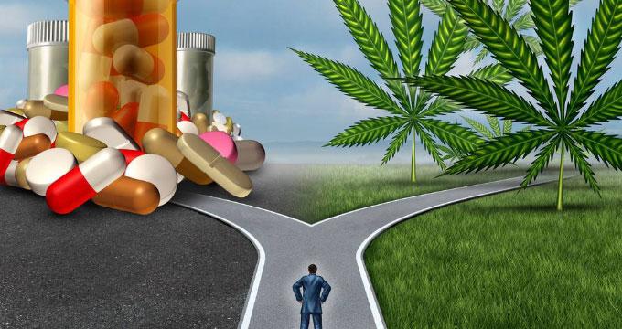 Le cannabis comme outil de substitution à l'alcool, aux opiacés ou au crack