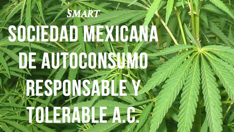 Cannabis Social Clubs : le Mexique s'y met aussi !
