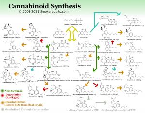 Synthèse des cannabinoides
