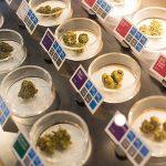 Cannabis Fleurs Dispensaire