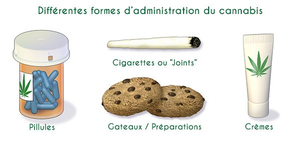 Cannabis - Différentes formes d'administration