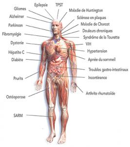 Maladies traitées schema