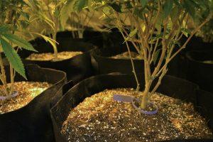 Neuf plantes avec leurs étiquettes