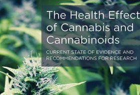 Les effets du cannabis et des cannabinoïdes sur la santé, conclusions du rapport américain