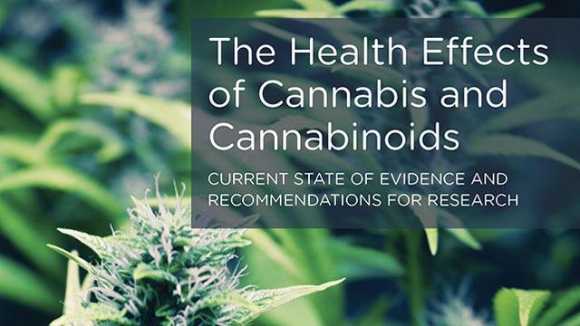 Les effets du cannabis et des cannabinoïdes sur la santé