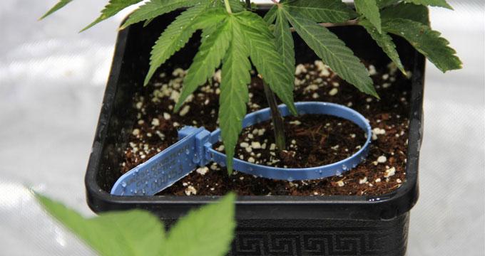 Plante labellisée
