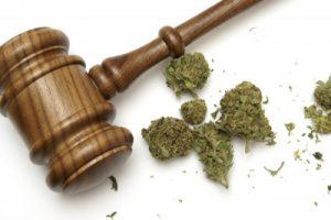 Justice cannabis