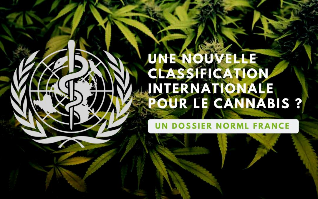 Classification du cannabis : Comment l'OMS change la donne !