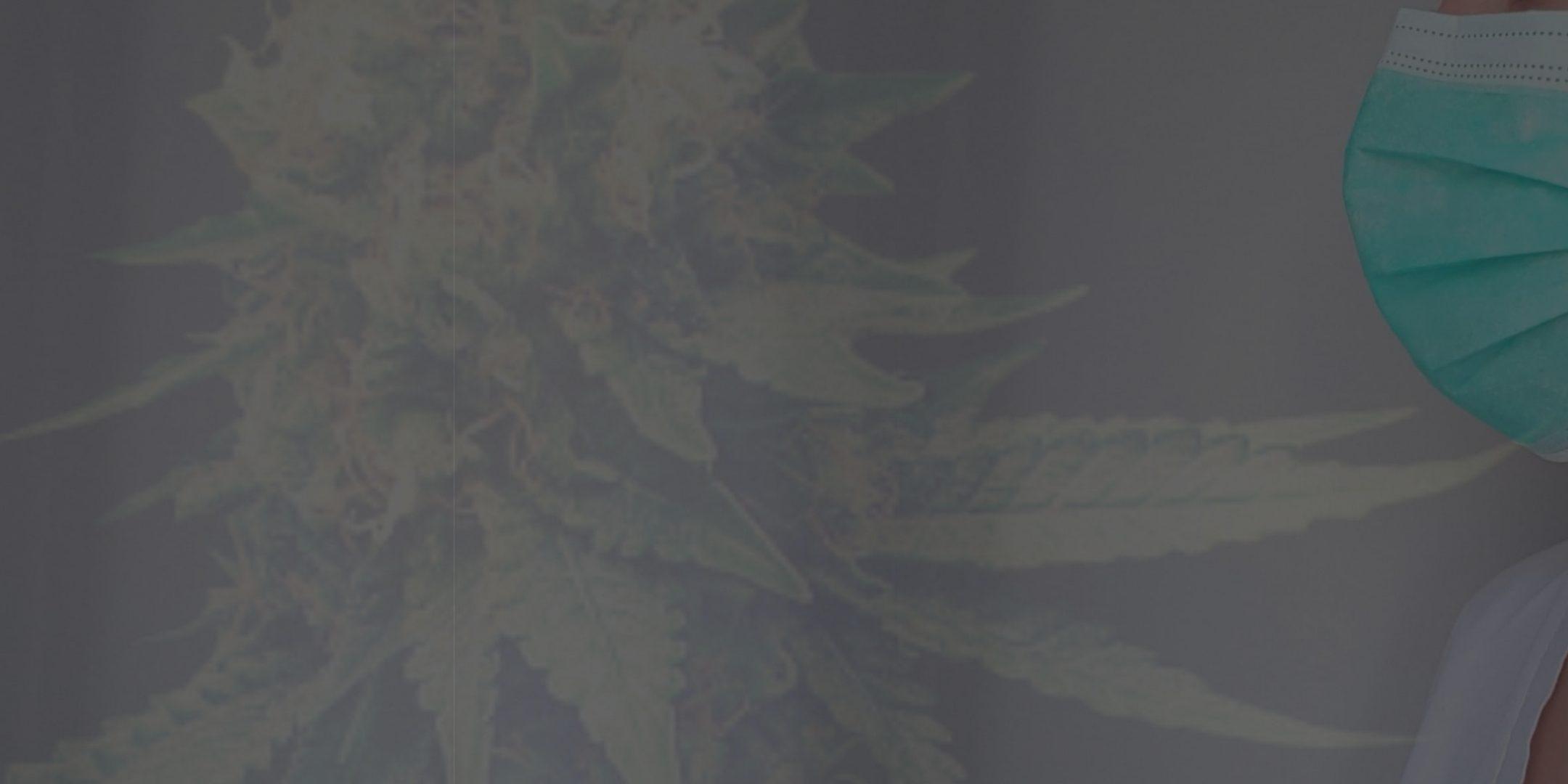 Covid-19, cannabis et confinement