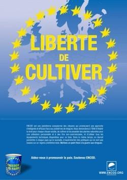 """Affiche """"Liberté de cultiver"""" par ENCOD"""