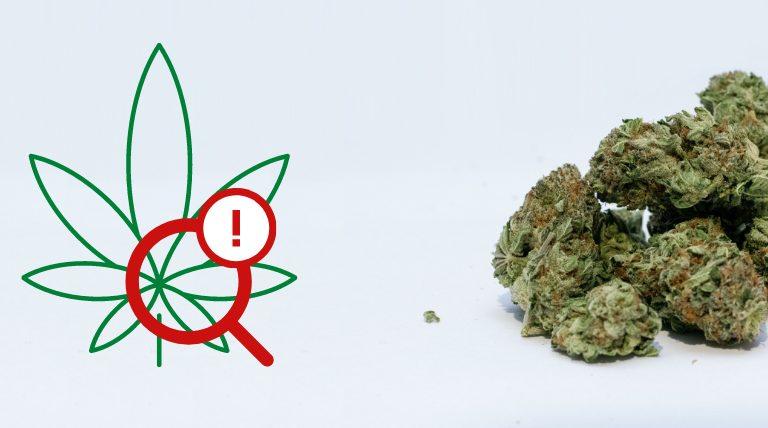 Alerte produit : fleurs séchées de cannabis adultérées aux néocannabinoïdes.